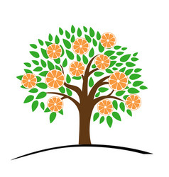 Orange or tangerine tree with green leaves vector