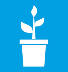 Plant in clay pot icon white vector