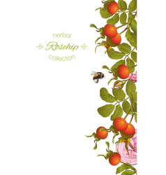 rose hip vertical banner vector image