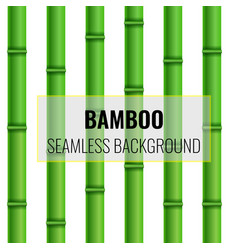 bamboo seamless background pattern realistic vector image