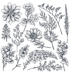 Collection hand drawn spring flowers and plants vector