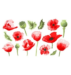 Hand drawn poppy set vector