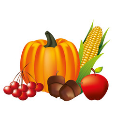 pumpkin acorn apple cherries and corn vector image