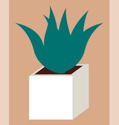 Succulent plant in pot evergreen houseplant vector