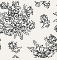 vintage magnolia flowers buds and leaves vector image