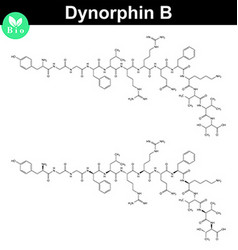 Dynorphin b chemical structure vector