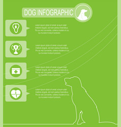 dog infographics with icons vector image vector image