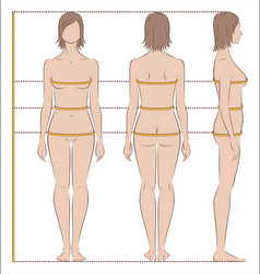 Women body measurements vector