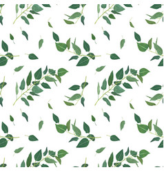 eucalyptus tree branches greenery leaves green vector image
