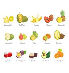 lychee and carambola avocado set names vector image