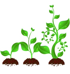 plant growth vector image