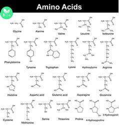 Biogenic amino acids formulas vector