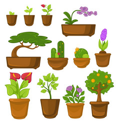 indoor plants trees and flowers cactus and bonsai vector image