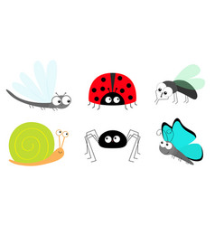 Lady bug ladybird fly housefly spider butterfly vector