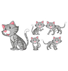 different actions of gray cat vector image