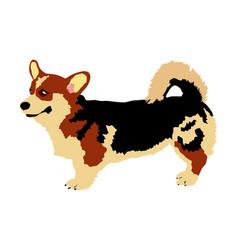 Dog portrait welsh corgi cardigan vector