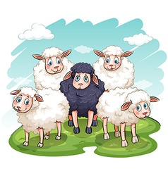 Five sheeps vector image