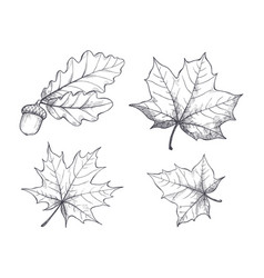 maple leaves monochrome sketches isolated vector image