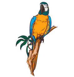 parrot macaw on a branch vector image