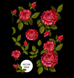 Set of red roses and elements for your design vector