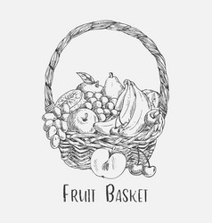 Wicker basket or ped sketch with garden fruit food vector