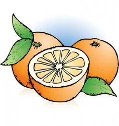 oranges sketch vector image vector image