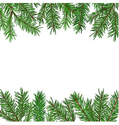 background with realistic green fir tree branch vector image