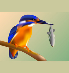 bird kingfisher on a branch with fish in its beak vector image