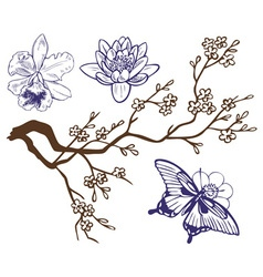 drawing branch with flowers and butterflies vector image