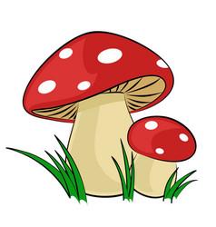 Forest mushrooms vector
