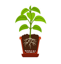 Houseplant with roots icon vector