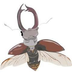 stag-beetle in fly vector image