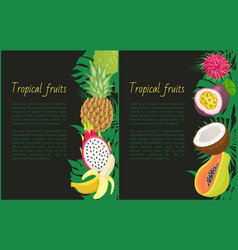 tropical fruits banner with exotic food and leaves vector image