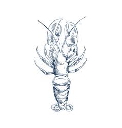 Crayfish common specie and seafood sketch icon vector