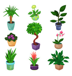 houseplant set plants and flowers vector image