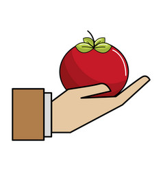 Organic tomato vegetable in the hand icon vector