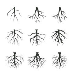 root vector image