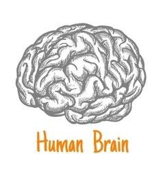 Human brain sketch symbol in gray colors vector image vector image