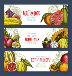Banners of tropical exotic fruits harvest vector
