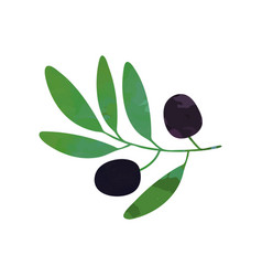 Black olives on branch with leaves organic and vector