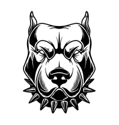 Head angry pitbull in vintage monochrome style vector