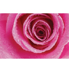 rose texture vector image