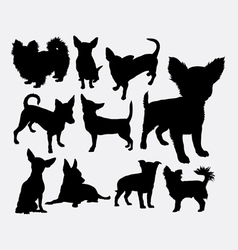 Chiwawa dog pet silhouette vector image