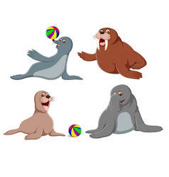 collection of the cute seals vector image