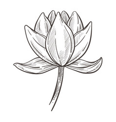 Exotic wild flower magnolia plant isolated sketch vector