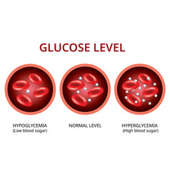 Glucose level in blood vessel normal level vector