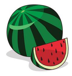 isolate ripe watermelon fruit vector image