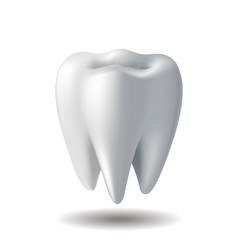 realistic white tooth isolated on white background vector image