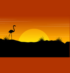 beauty scenery flamingo at sunset silhouette vector image