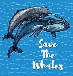 Poster for whales saving vector